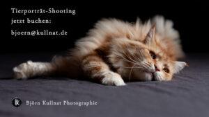 Tierporträt